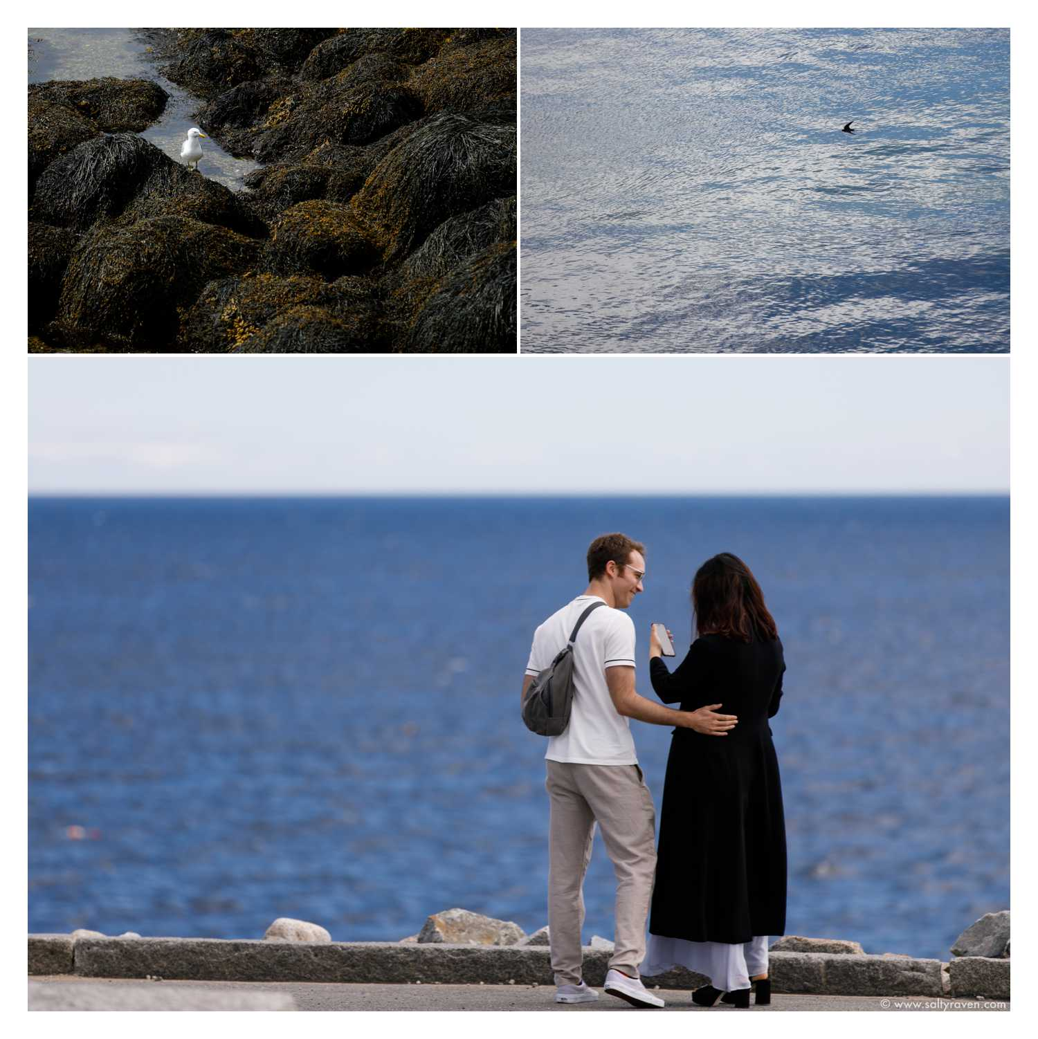 Photos of birds I took while waiting to photograph the surprise proposal in Rockport, MA.